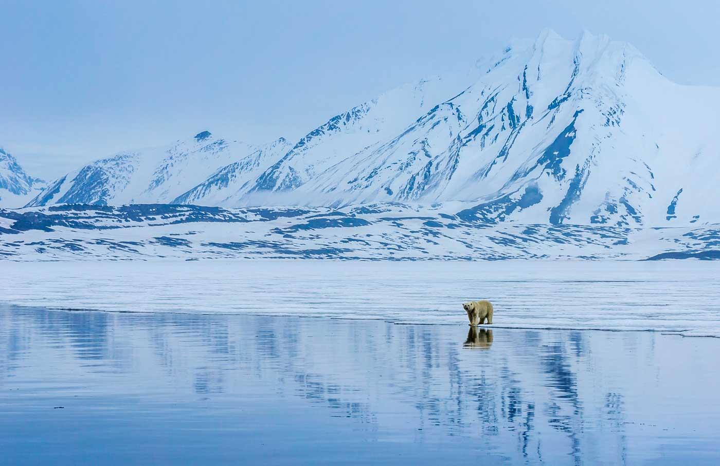 Oso polar sobre el hielo - Autor ALVARO ROMÁN CABRERIZO - Foto realizada en el Ártico