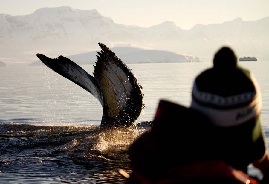 ocean-nova-ballena-viatges-tuareg