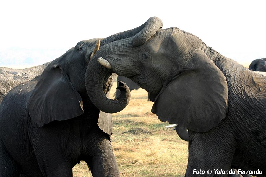 Vida salvaje en Namibia | Foto © Yolanda Ferrando