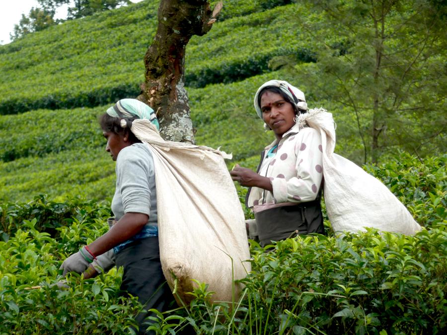 Trabajadoras en Lipton Hill, Sri Lanka | Foto © Joan Bartomeu