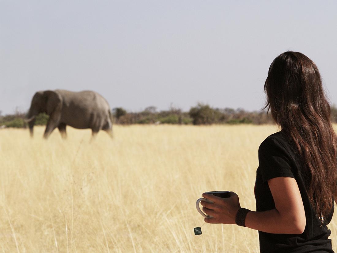 Desayuno con elefantes en Botswana | Foto © Dakila Kalaw