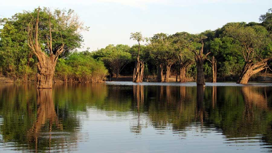 destinos-verano-brasil-amazonas-Jose-Chans