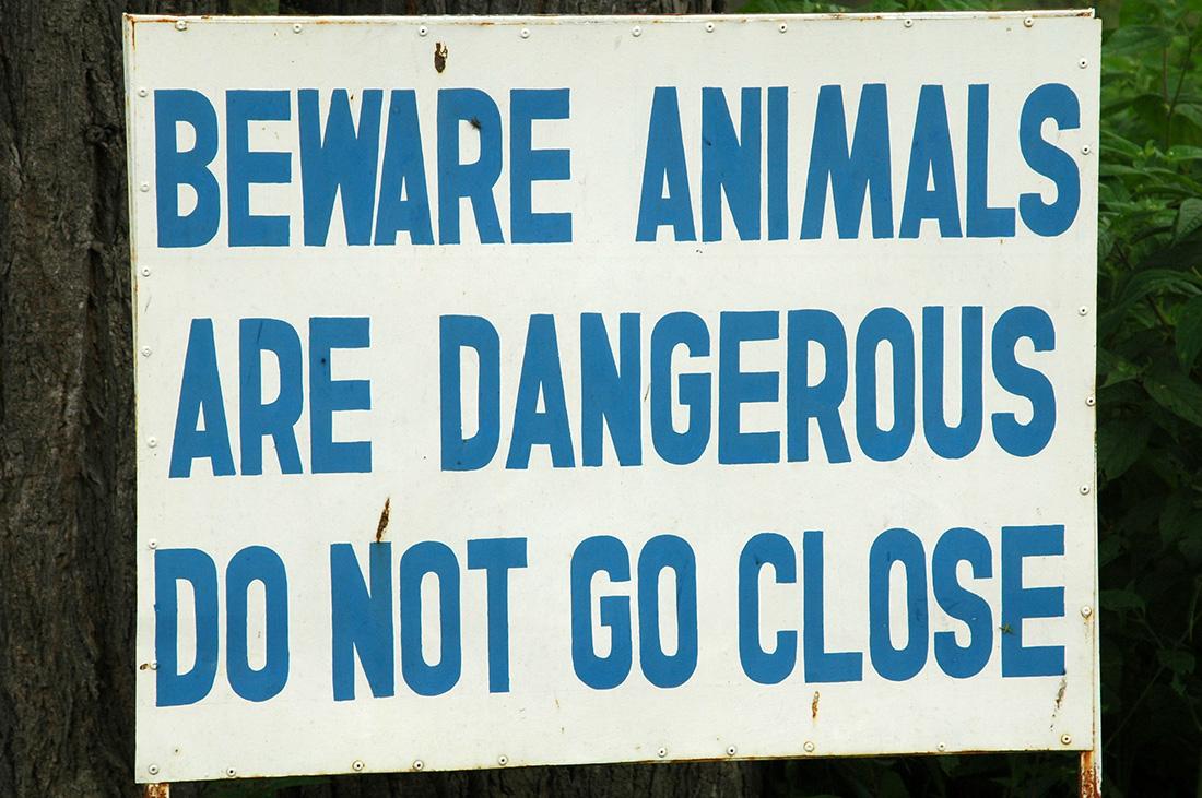 Cuidado con los animales | Foto © Àlex Póo