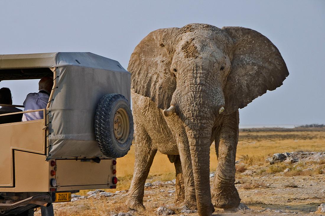Elefante en un safari en Namibia   Foto © Eduardo Barco