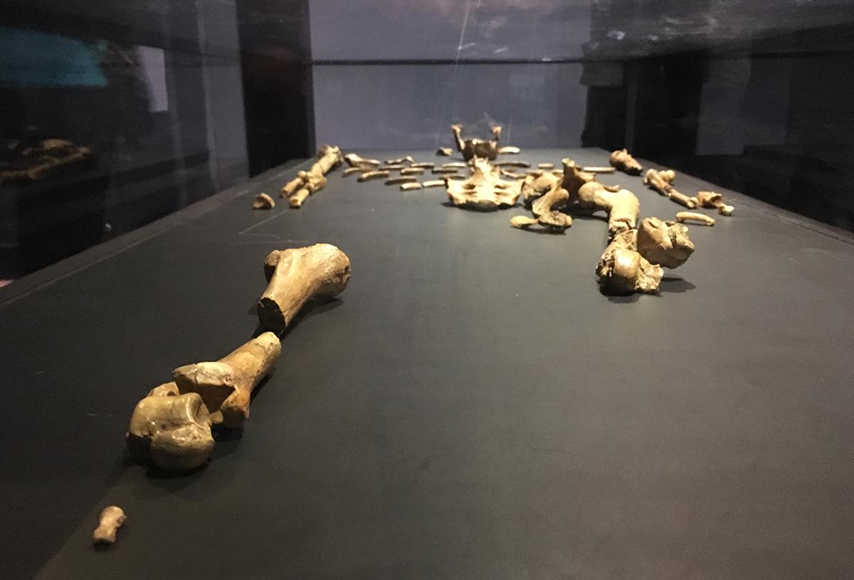 Réplica del esqueleto de Lucy en Museo Nacional de Etiopía   Foto © Xavier Mazcaray