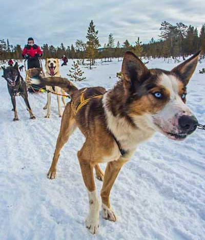 Marzo, la mejor época para ver Auroras Boreales en Finlandia