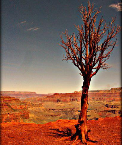 El Grand Canyon (Arizona) se ha convertido en una visita imprescindible en todo viaje al oeste de los USA. ... <br> <a class='vermellteula'>Seguir leyendo >>></a>