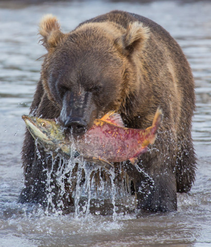 Javier Pulido viajó al Lago Kurilskoye (Kamchatka) en 2015. &nbsp;Allí grabó estas imágenes que nos ... <br> <a class='vermellteula'>Seguir leyendo >>></a>