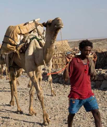 ablar de Etiopía es hablar de historia entremezclada con leyenda; es observar la variedad de paisajes ... <br> <a class='vermellteula'>Seguir leyendo >>></a>