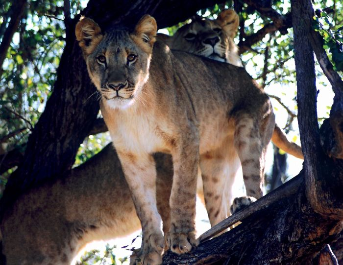 fotos de Botswana autor:Monica Benitez