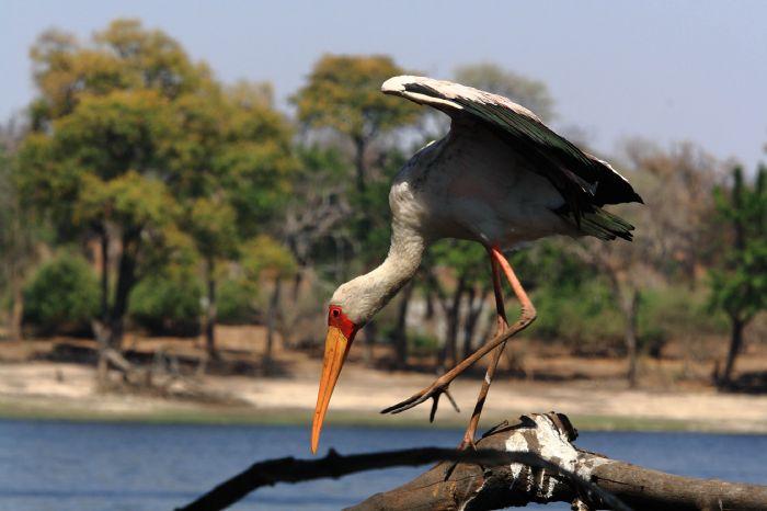 fotos de Botswana autor:Antonio Julia
