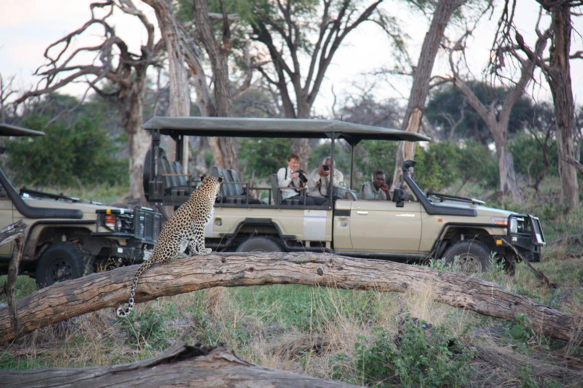 fotos de Botswana autor:Wilderness