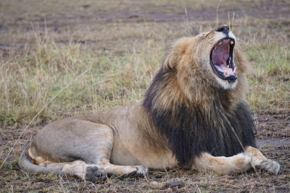 fotos de Kenia autor:Cecili Tarruella
