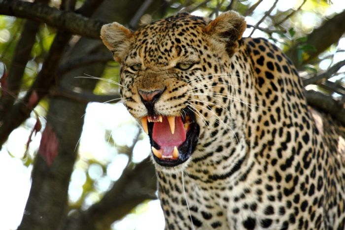 fotos de Kenia autor:Nuria Burrial