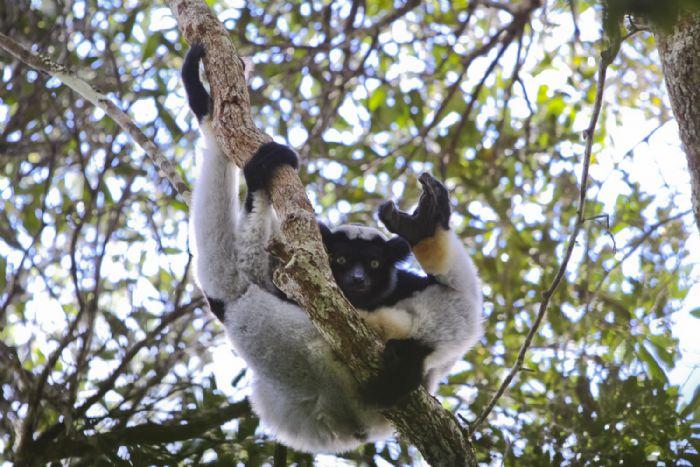 fotos de Madagascar autor:Dolors Coromines