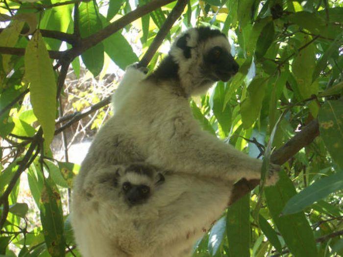 fotos de Madagascar autor:Carmen Clapes