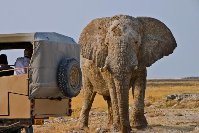 fotos de Namibia autor:Ana Cabaña