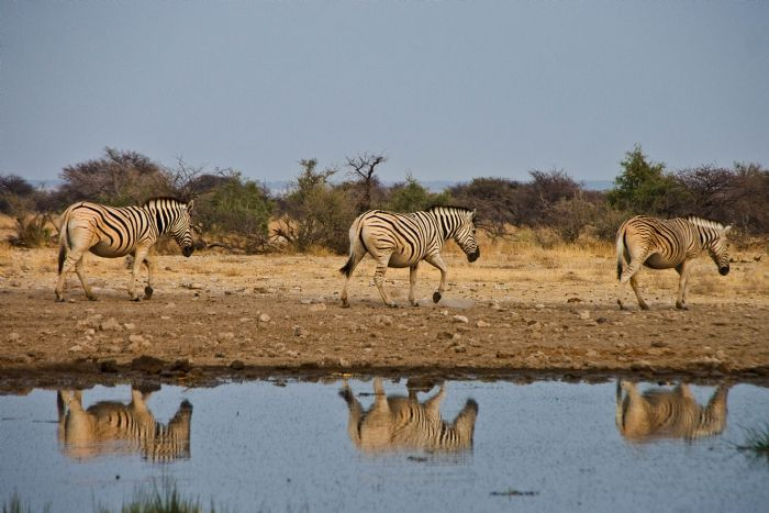 fotos de Namibia autor:Mercè Gayà