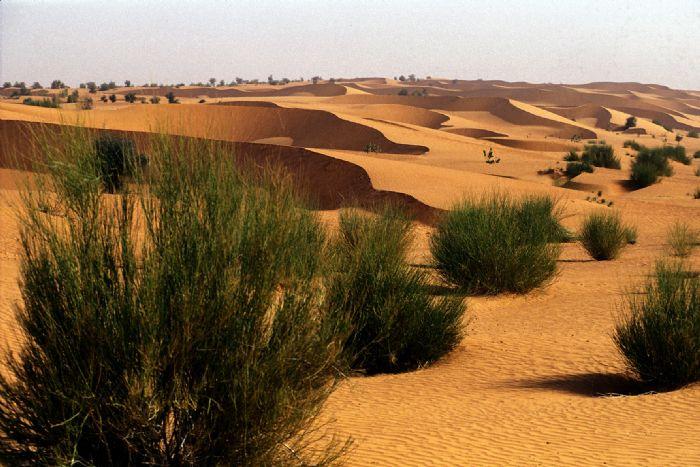 fotos de Senegal autor:Fatima Llambrich
