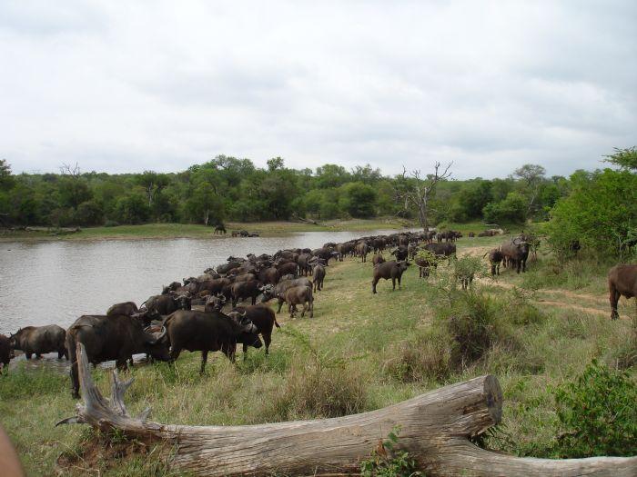 fotos de Sudáfrica autor:Mercè Gayà