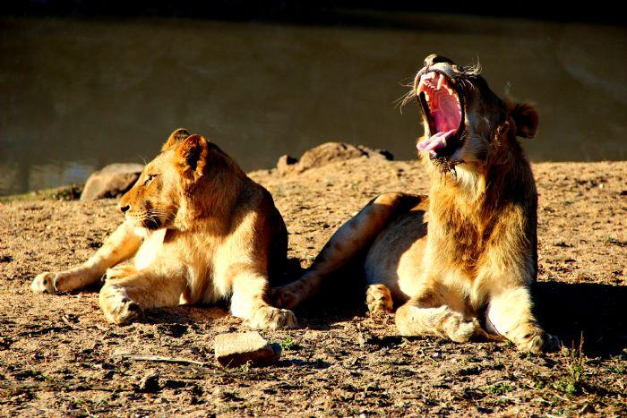 fotos de Swaziland autor:Jorge Dantart