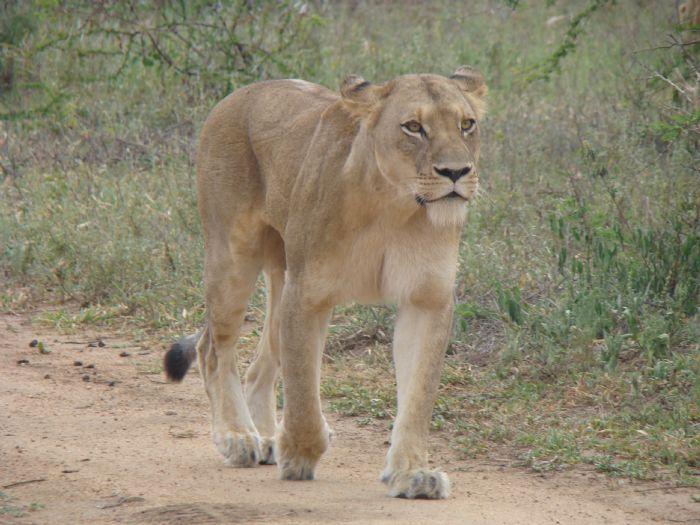 fotos de Swaziland autor:Federico Robello