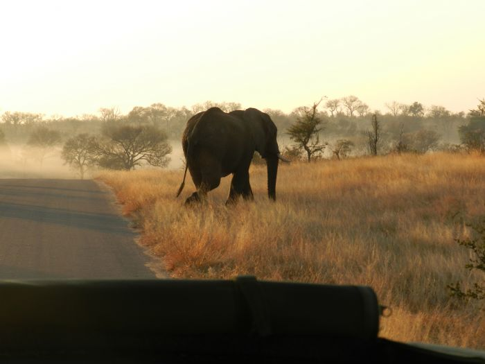 fotos de Swaziland autor:Anna Garcia