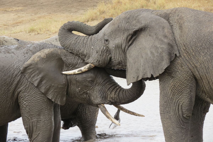 fotos de Tanzania autor:Ignasi Rovira