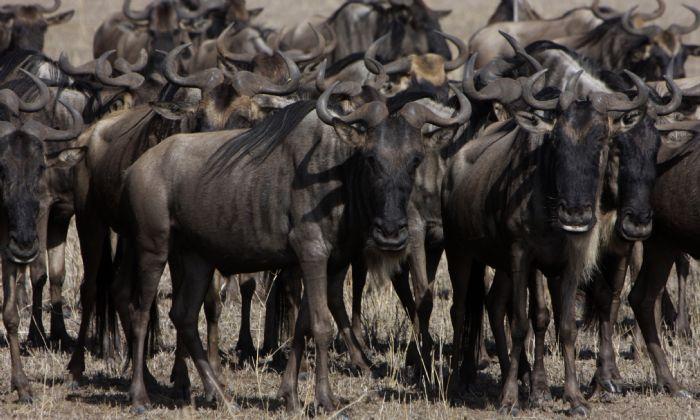 fotos de Tanzania autor:Jose Miguel