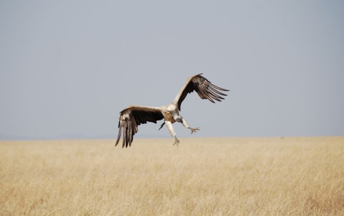 fotos de Tanzania autor:Alfred Berges