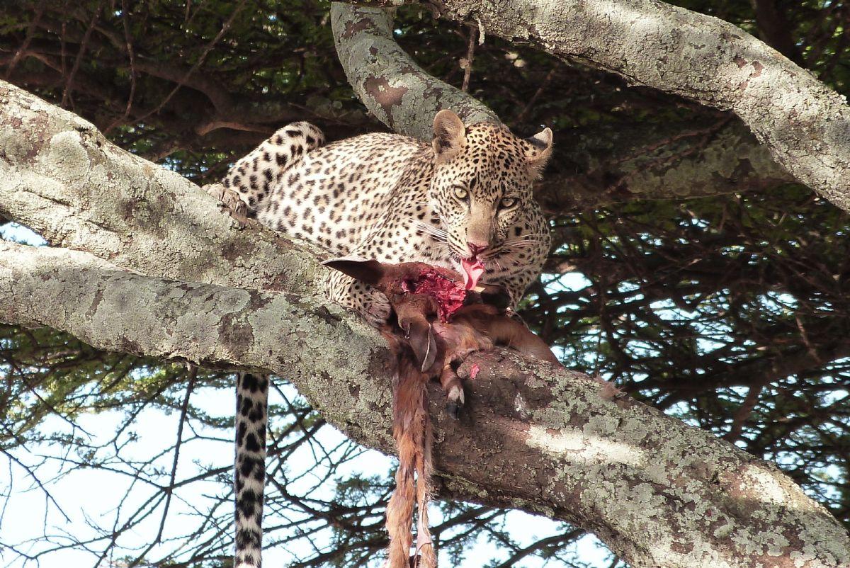 fotos de Tanzania autor:Bruna Palau