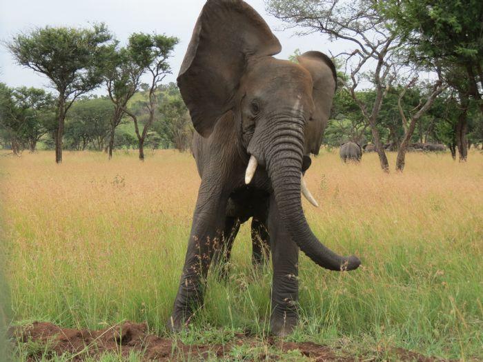 fotos de Tanzania autor:Pere Llora