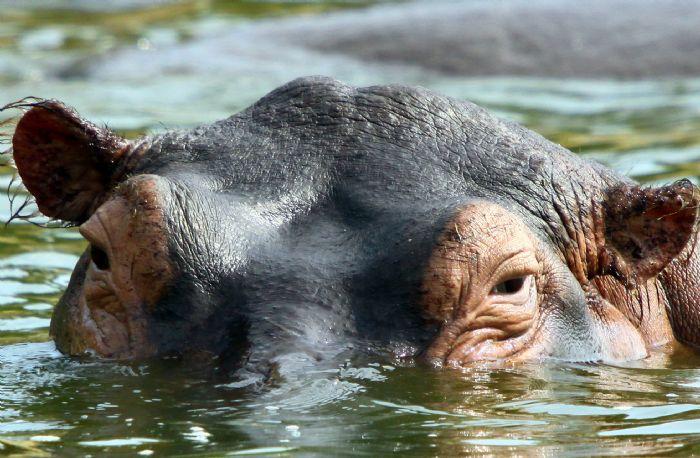fotos de Uganda autor:Emilio Ayats