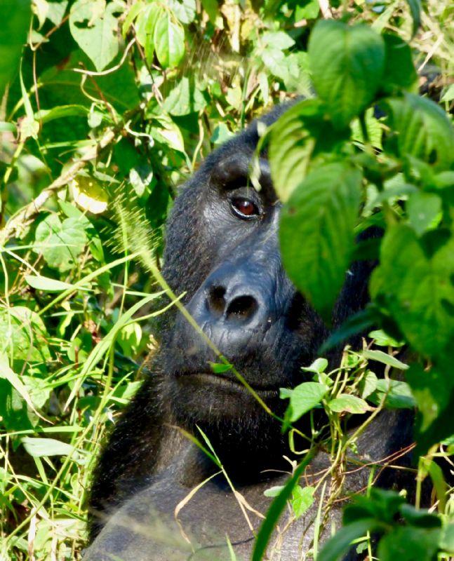 fotos de Uganda autor:Inés Moreno