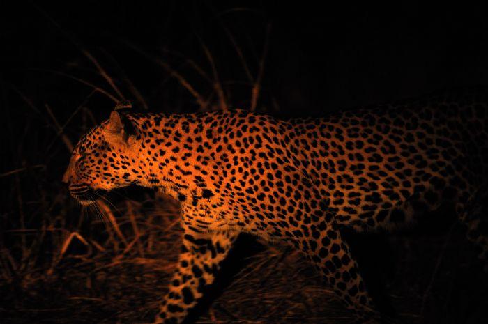 fotos de Zambia autor:Sunway Safaris