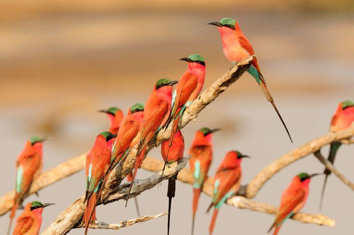 fotos de Zambia autor:Monica Benitez