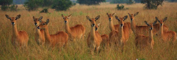fotos de Zambia autor:Antonio Julia