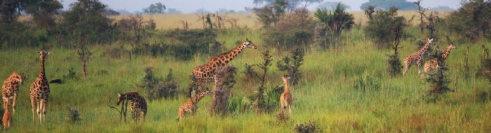 fotos de Zambia autor:Jordi Torrallardona07