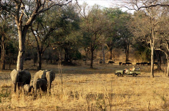 fotos de Zambia autor:Bruce Taylor - Sunway Safaris