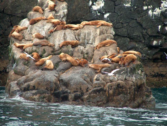 fotos de Alaska autor:Carmen Ananos