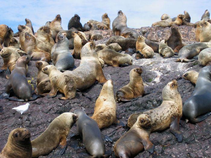 fotos de Chile autor:Jaume Sancho