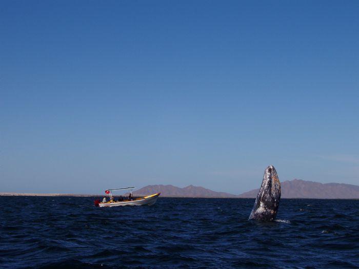 fotos de México autor:Tuareg