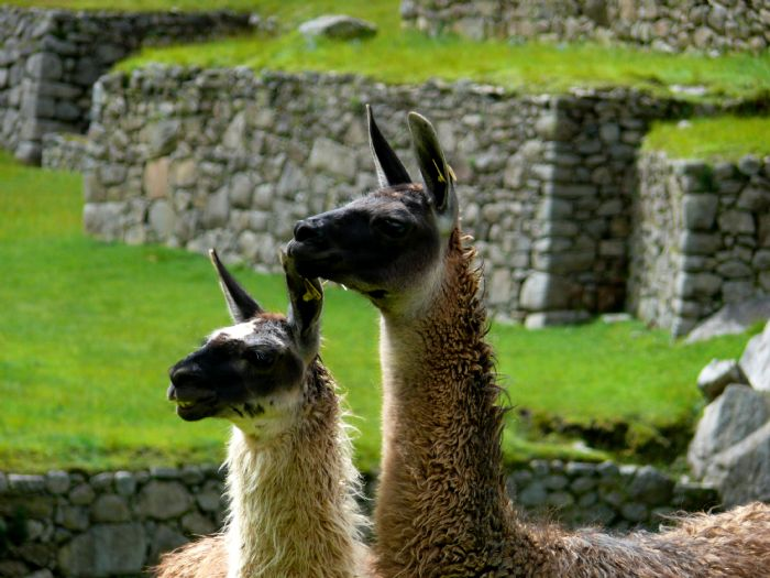 fotos de Perú autor:Ramon Puig