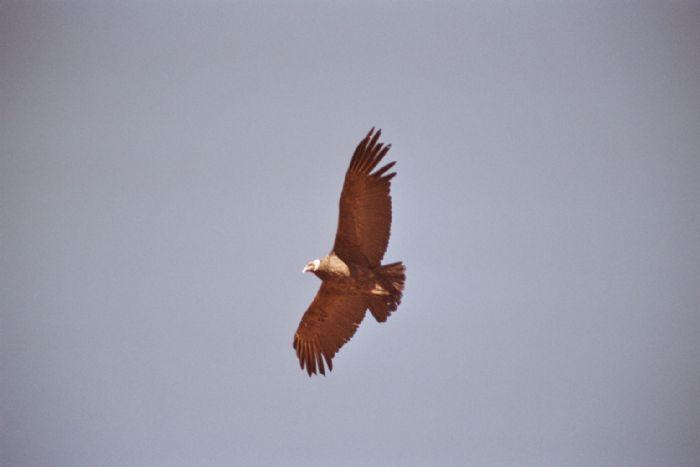 fotos de Perú autor:Salvador Alepuz