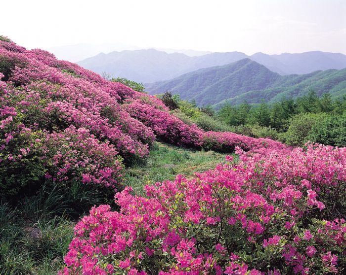 fotos de Corea del Sur autor:Archivo Tuareg
