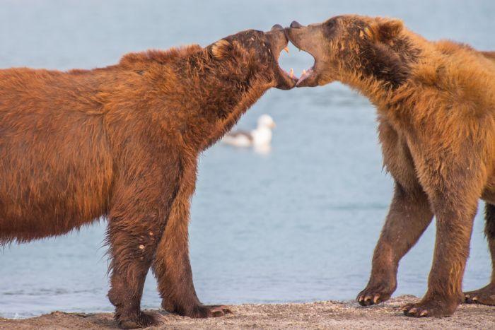 fotos de Rusia autor:Lost World Kamchatka