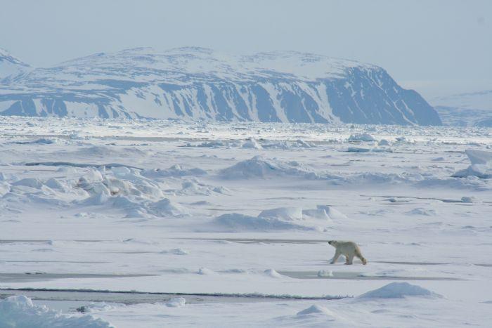 fotos de Ártico autor:J. M. Ordax