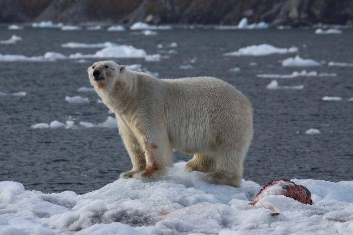 fotos de Ártico autor:Pedro Martin