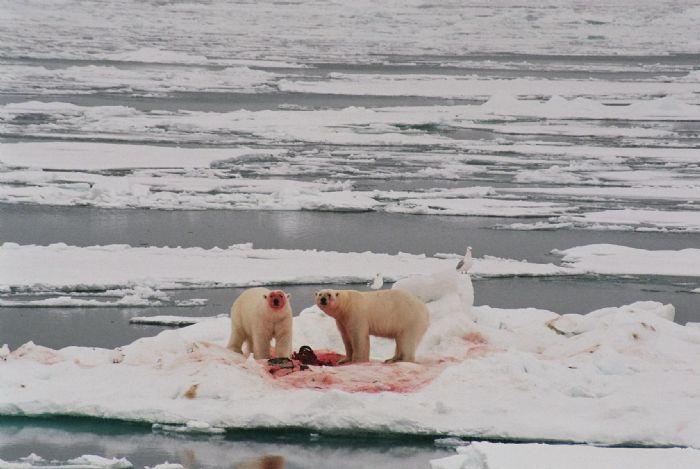 fotos de Ártico autor:Alicia Monge