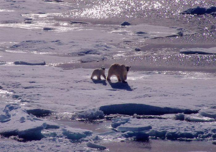 fotos de Ártico autor:Hilda Martinez